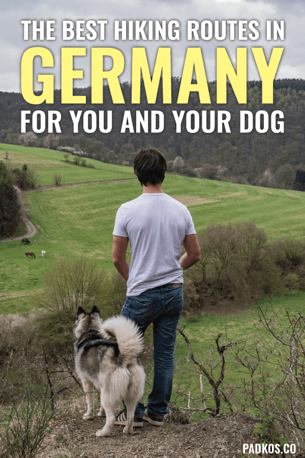The best hiking trails in Germany for you and your dog - padkos.co