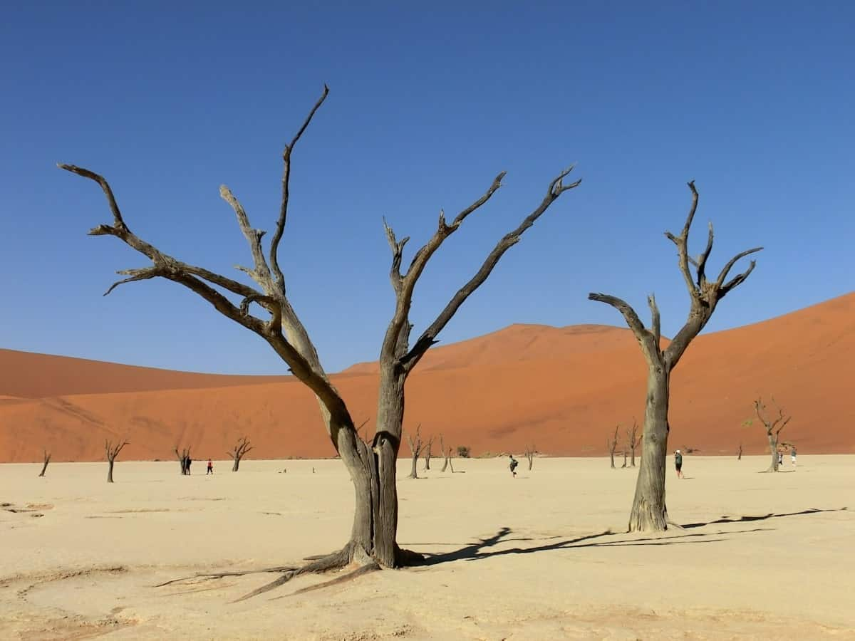 Sossusvlei is undoubtably one of the best places to visit in Namibia and the deadvlei in the image is one of the reasons why.