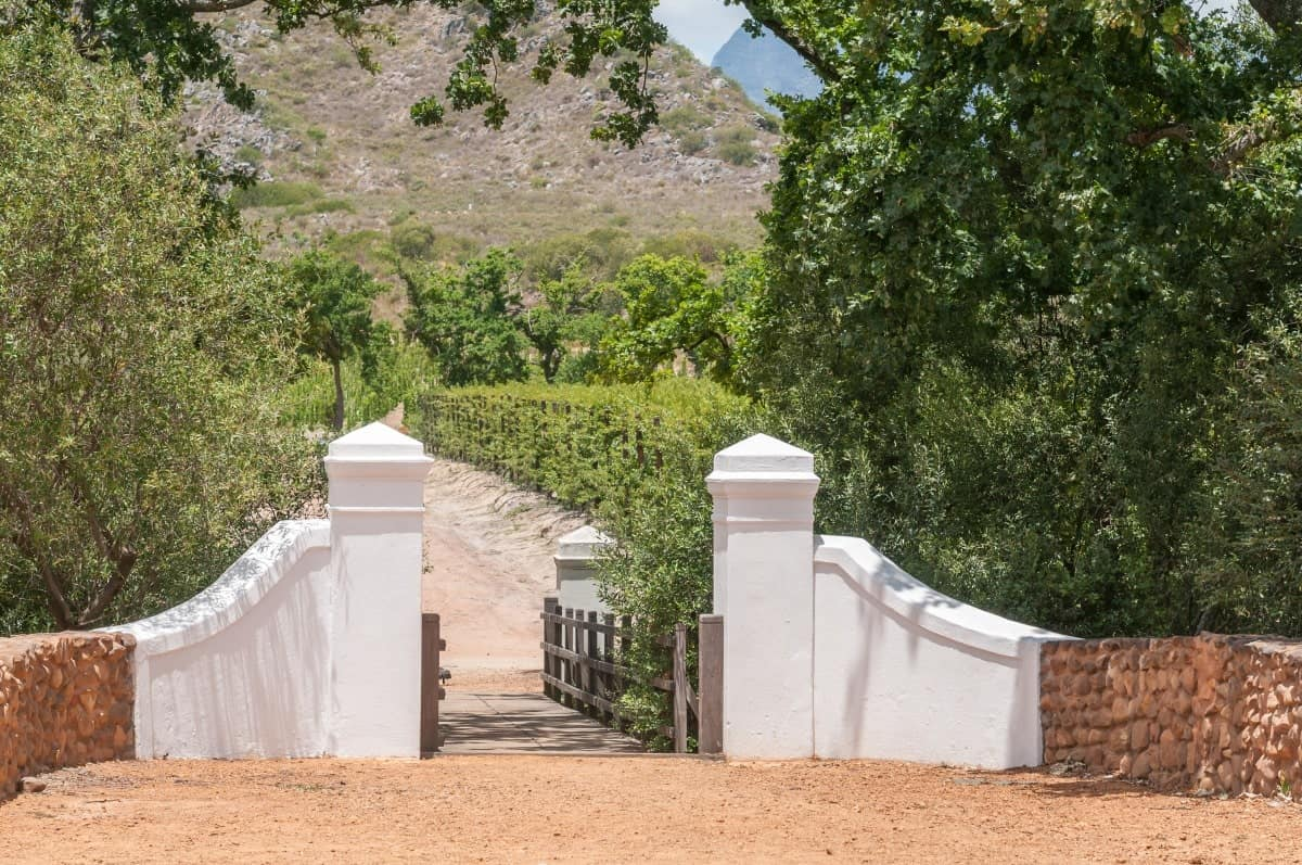 The Most Instagrammable Places in Cape Town - Vineyards